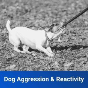 Dog Aggression and Reactivity