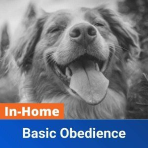 In Home Basic Obedience