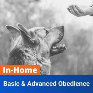 In Home Basic and Advanced Obedience